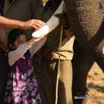 Learning by Traveling: A Tryst with Elephants in the Wild