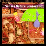 Five Senses Nature Sensory Box: Bringing Nature Indoors