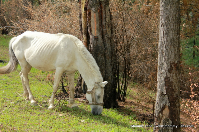 Himachal Pradesh, green, nature, horse, Chindi